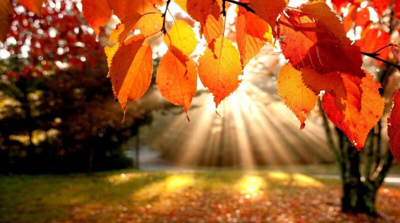 Le energie dell'autunno: la terra ed il metallo