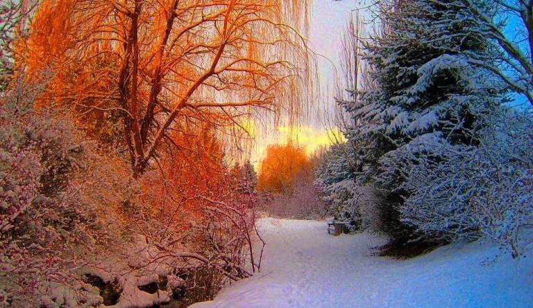 Yin Yang in inverno